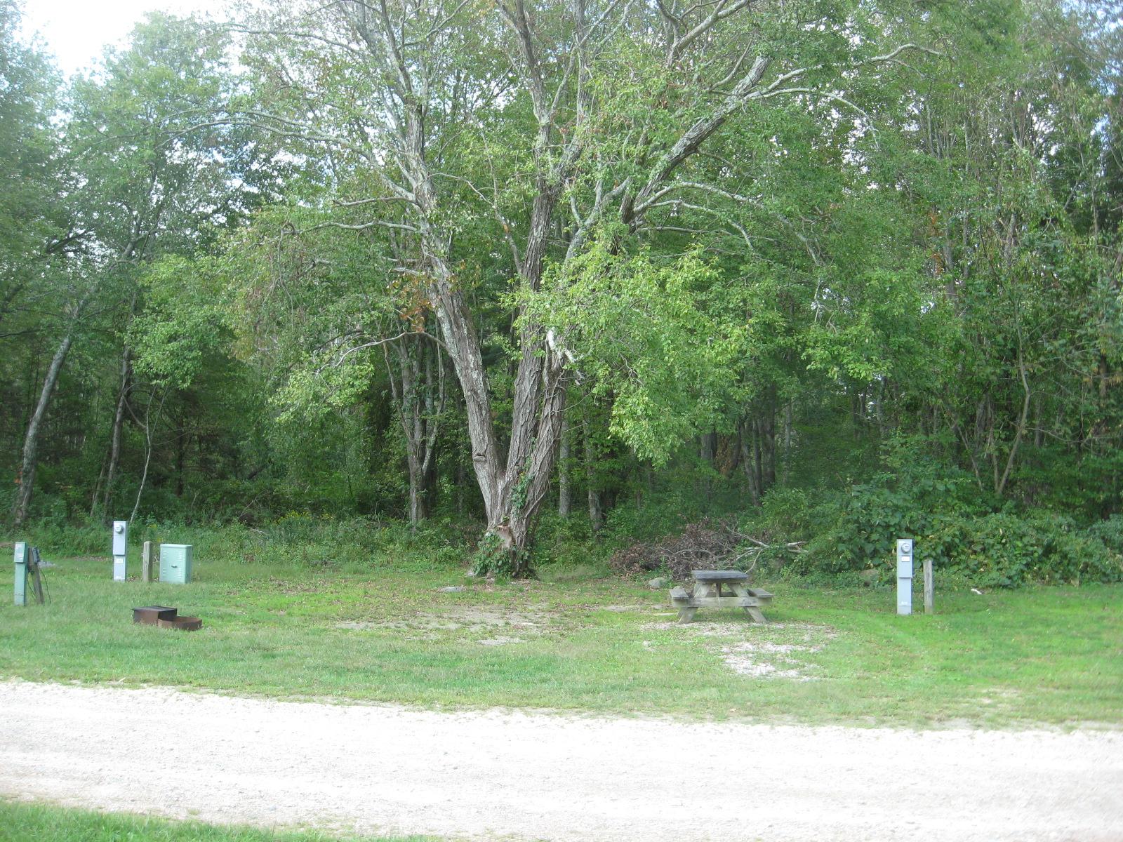Site 155